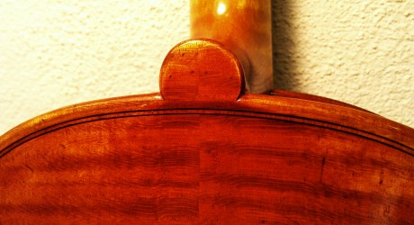 Kiernoziak Viola 4